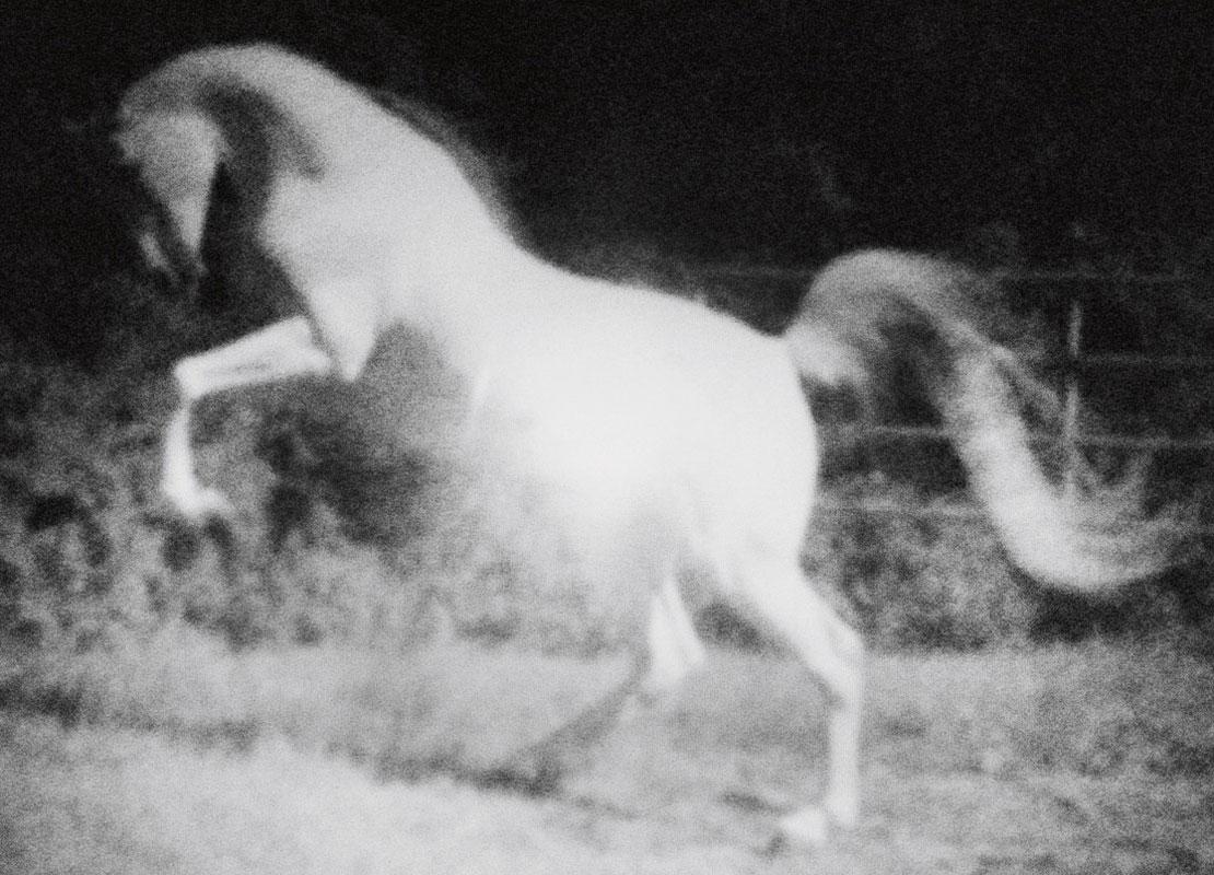 Puledra libera sul cavallo - 2 2